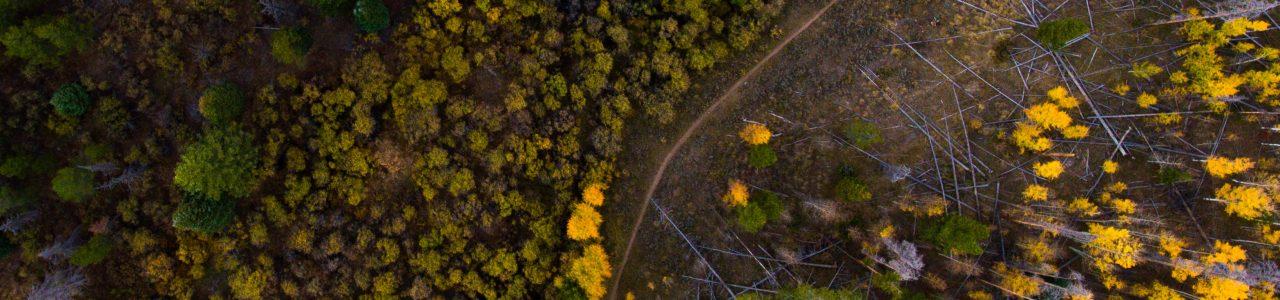 Drohnenaufnahmen Forstwirtschaft