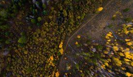 Luftbilder Forstwirtschaft